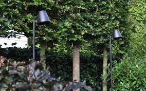 parker path royal botania led